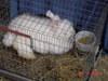Nh_sheep_wool_may_2008_065